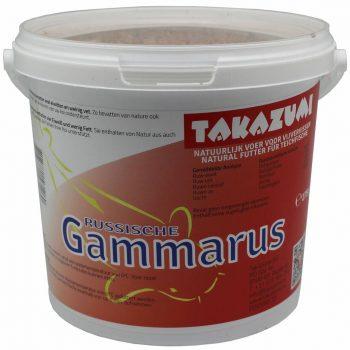 gammarus (1)